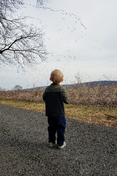 toddler watching snow goose migration
