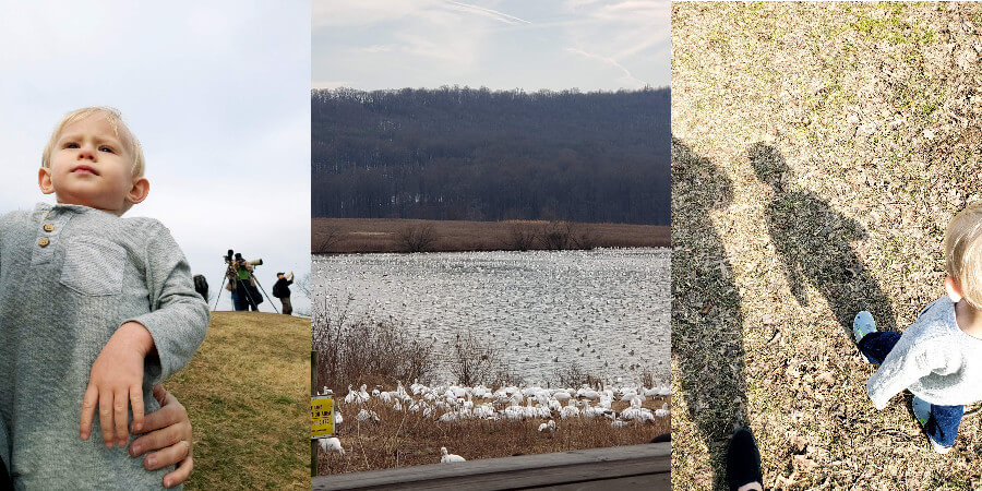 photo gallery- toddler outside watching geese, hundreds of geese on water, toddler walking with shadow