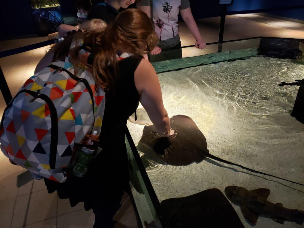 woman holding toddler reaching into tank to touch stingray, explorationmotherhood.com