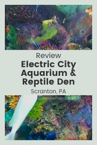 Join the Exploration Motherhood crew for this Electric City Aquarium & Reptile Den review!  Learn more about this Scranton aquarium in Pennsylvania. #review #thingstodo #kidsactivities #pennsylvania #explorationmotherhood #aquarium #electriccity #fish #reptiles