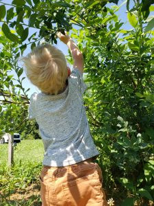Pick your own fruit at Moselum Meadows