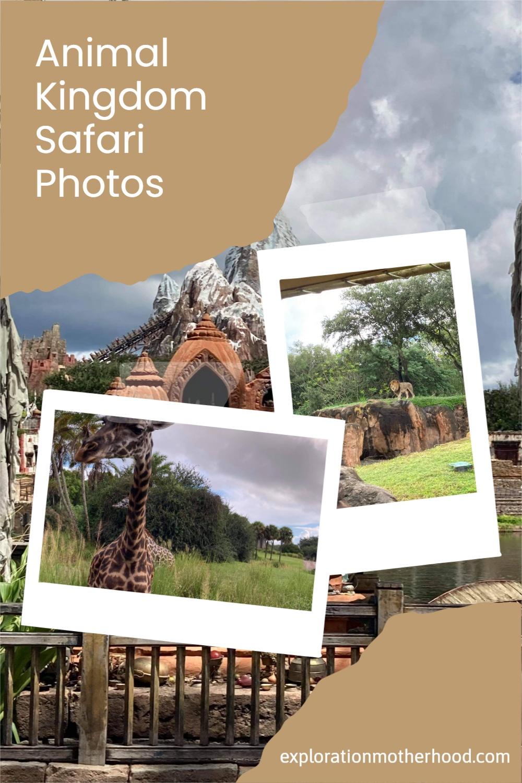 Socially Distanced Animal Kingdom Photo Tour