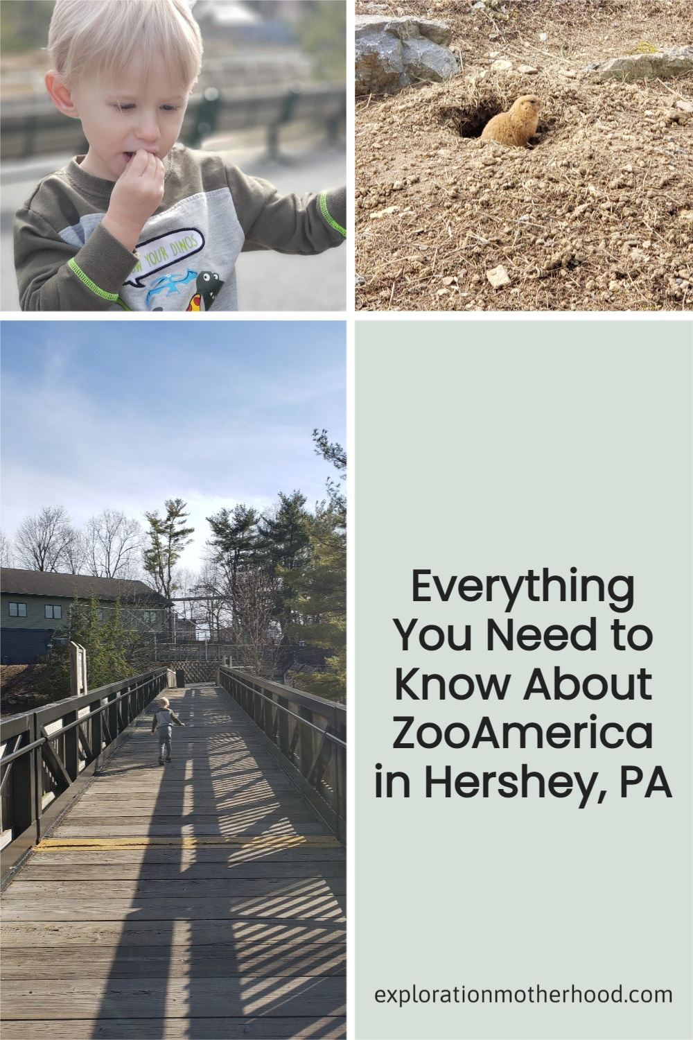 Hershey Zoo Review for Moms - ZooAmerica in Hershey, PA