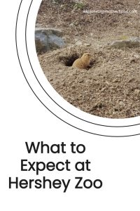 What to expect at Hershey Zoo